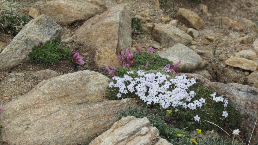 Click image for larger version  Name:AlpineFlowers_s.jpg Views:46 Size:230.9 KB ID:134458