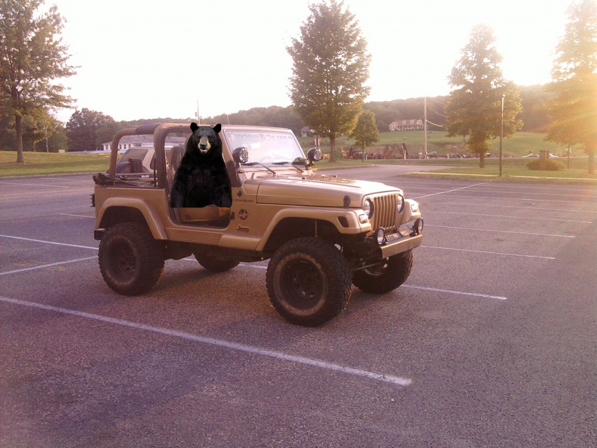 Click image for larger version  Name:bears jeep.jpg Views:107 Size:224.0 KB ID:96849