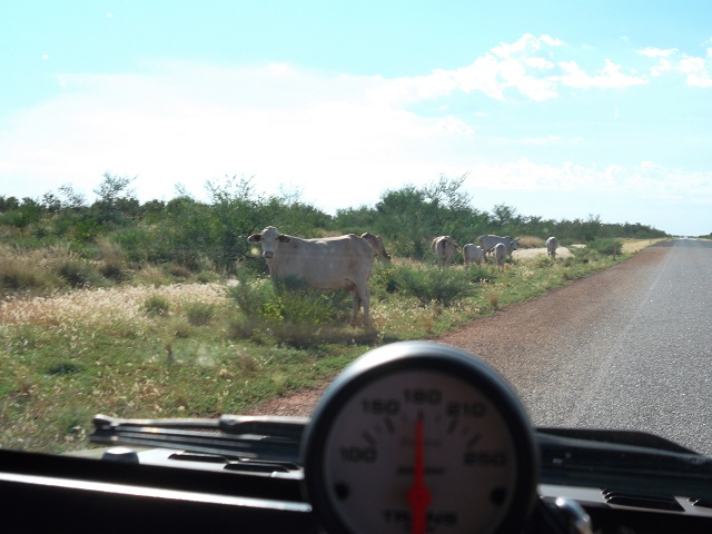 Click image for larger version  Name:Cows.JPG Views:98 Size:117.5 KB ID:149878