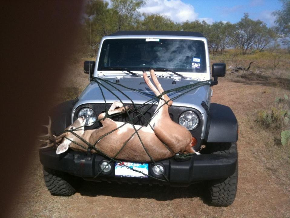 Click image for larger version  Name:deer.jpg Views:3949 Size:223.4 KB ID:29990