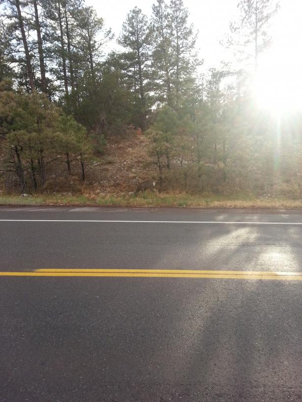 Click image for larger version  Name:Deer sun.jpg Views:179 Size:221.8 KB ID:259896