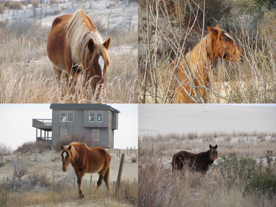 Click image for larger version  Name:horses.jpg Views:58 Size:112.1 KB ID:35659