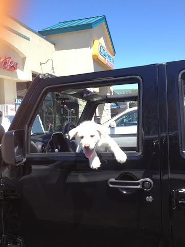 Click image for larger version  Name:Jeep dog.jpg Views:76 Size:19.9 KB ID:670097