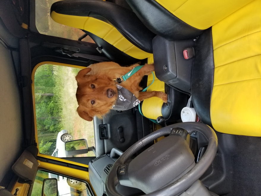 Click image for larger version  Name:JEEPDOG.jpg Views:8 Size:230.0 KB ID:4150297