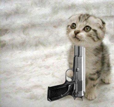 Name:  Kitty.jpg Views: 4218 Size:  23.4 KB