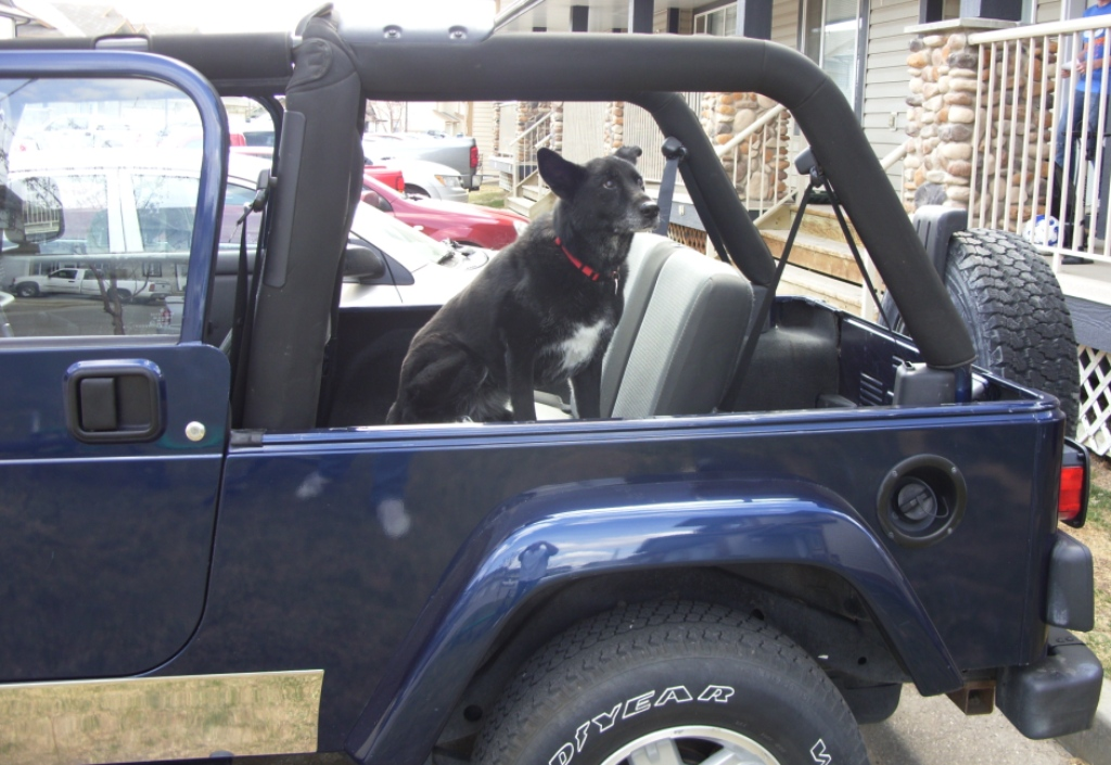 Better Ride For The Dog Than The Old Willys....