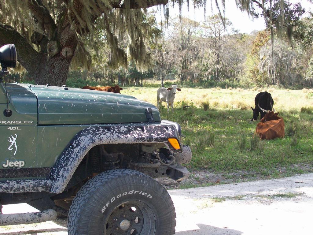 Jeep 103