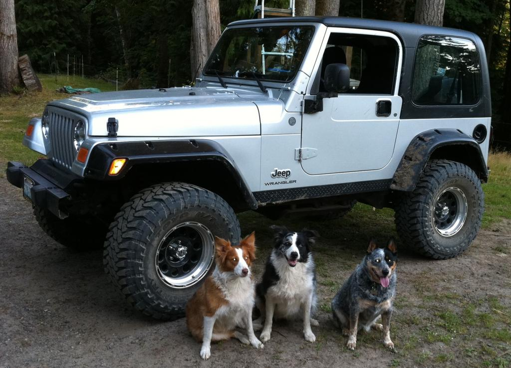 "My Jeep ""kelso"" And His Doggy Friends"