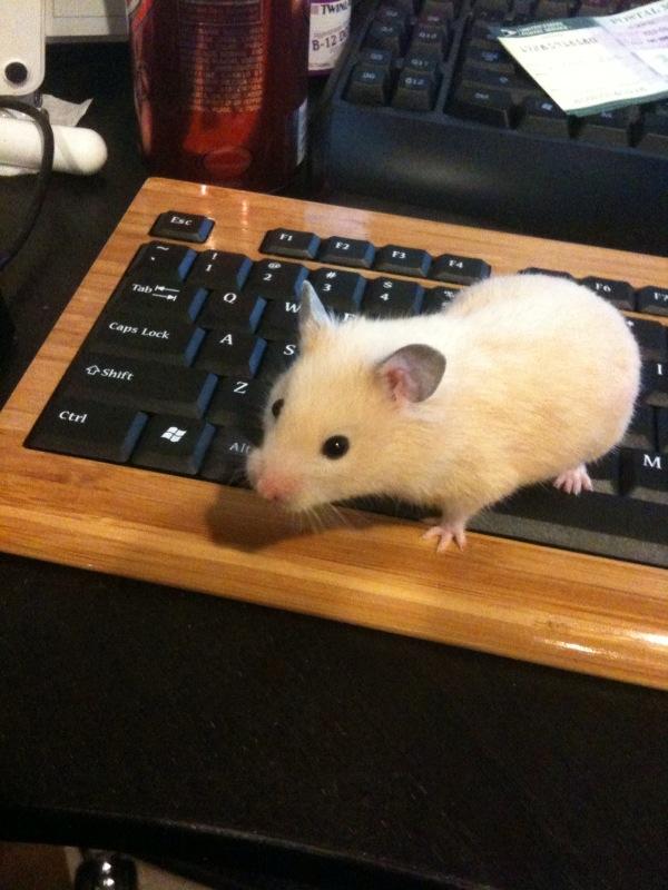 Po Mouse